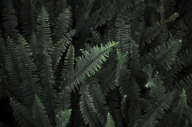 Pani Green – Jak opiekować się paprotką